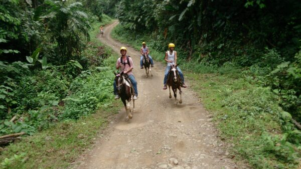 Horseback riding throught the trails