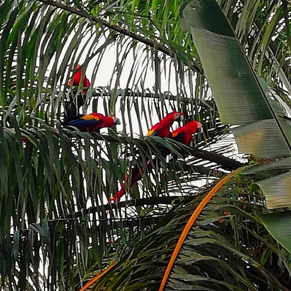 macaws sitting in a tree having a talk